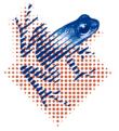 logo_mvid